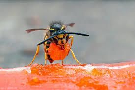 Which of these stinging creatures on average are the most dangerous to humans if they get stung?