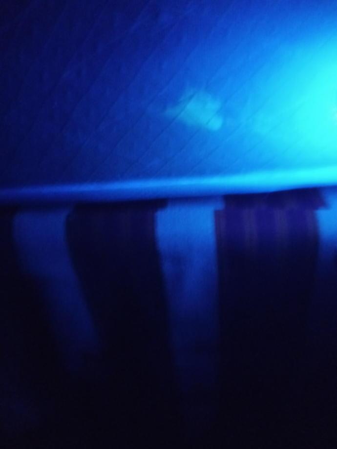 Same spot in black light