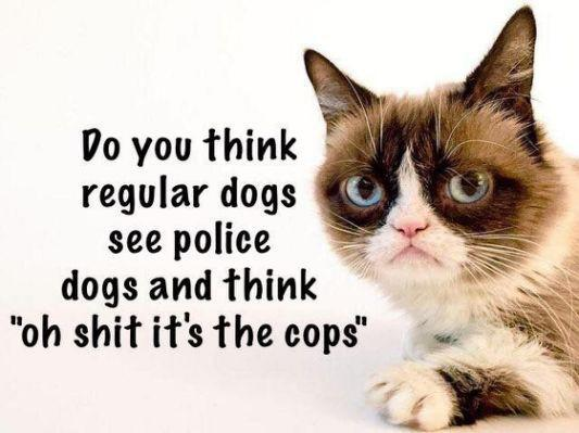 Which is the favorite slang for police?🚔👮🥓🐷🍩?