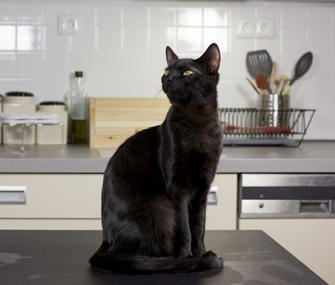 Do you let your cats stand or sit on the counter?