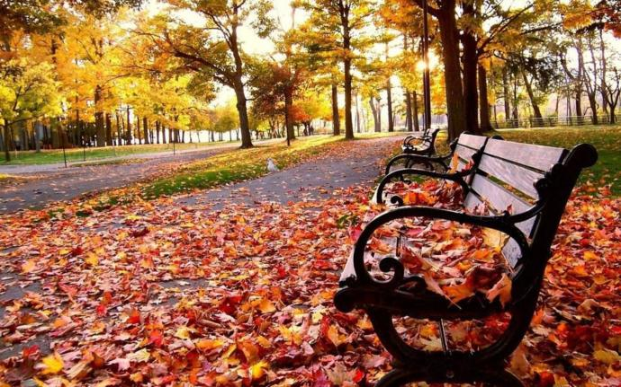 What is your favorite thing about the fall season?