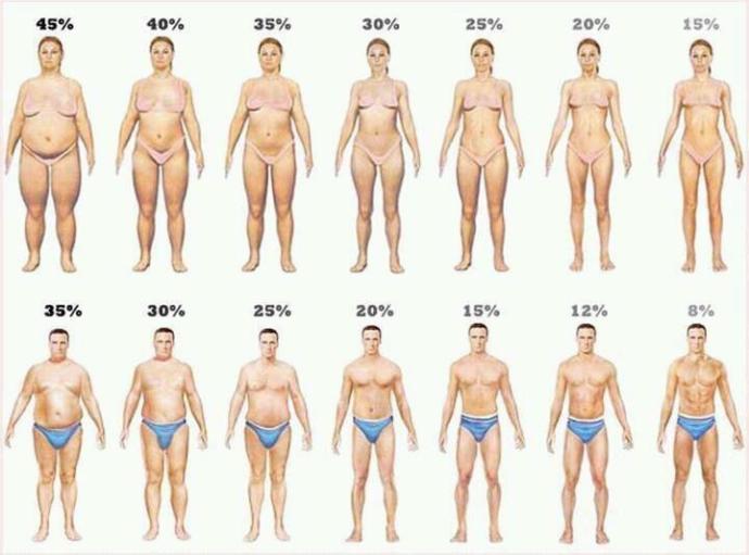 BMI on a person.