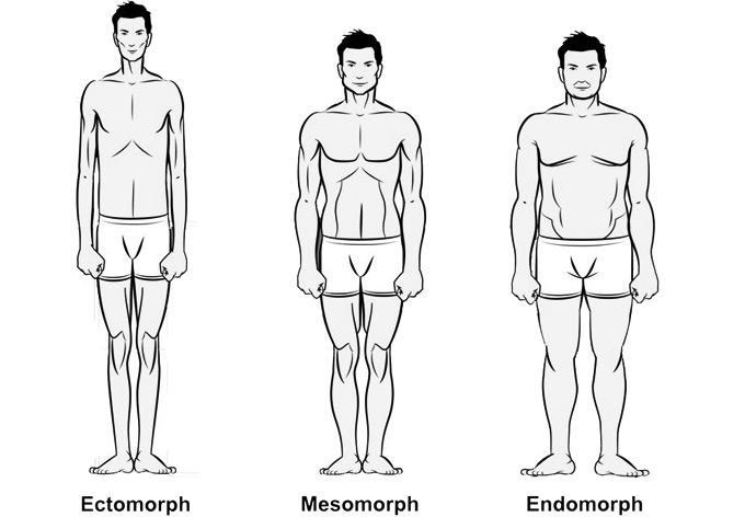 Fit male body types.
