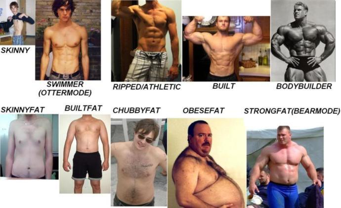 The ten male body types.