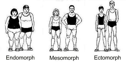 Three body types.
