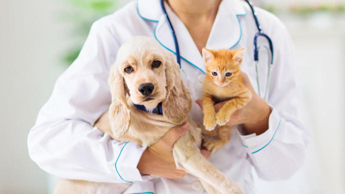 Can you afford veterinary expenses?