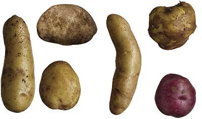 Does your Vagina smell like potatoes?