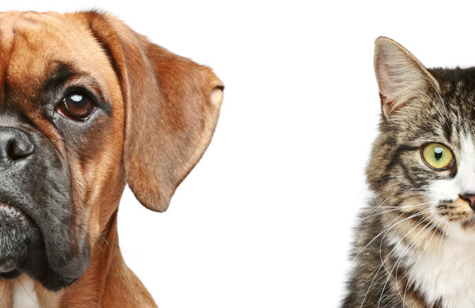 Cats or Dogs? Which do you like more?