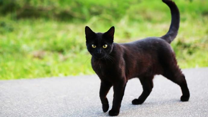 Do you believe a black cat crossing your path brings bad luck?