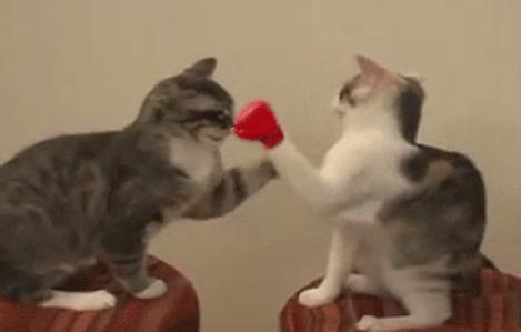 Which pair of cats is doing the cooler moves: thumbs up or boxing?