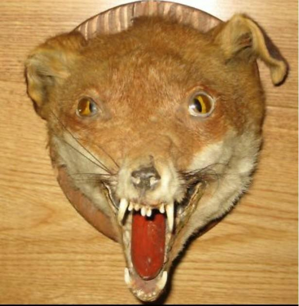 How so you feel about Taxidermy in general?