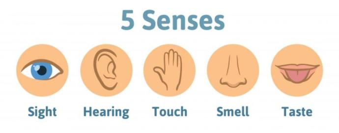 Which one of your 5 senses would you be least willing to loose if you were to be born without one and why that one?
