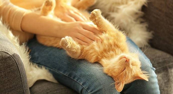 Have any of your cats enjoyed having their belly rubbed?