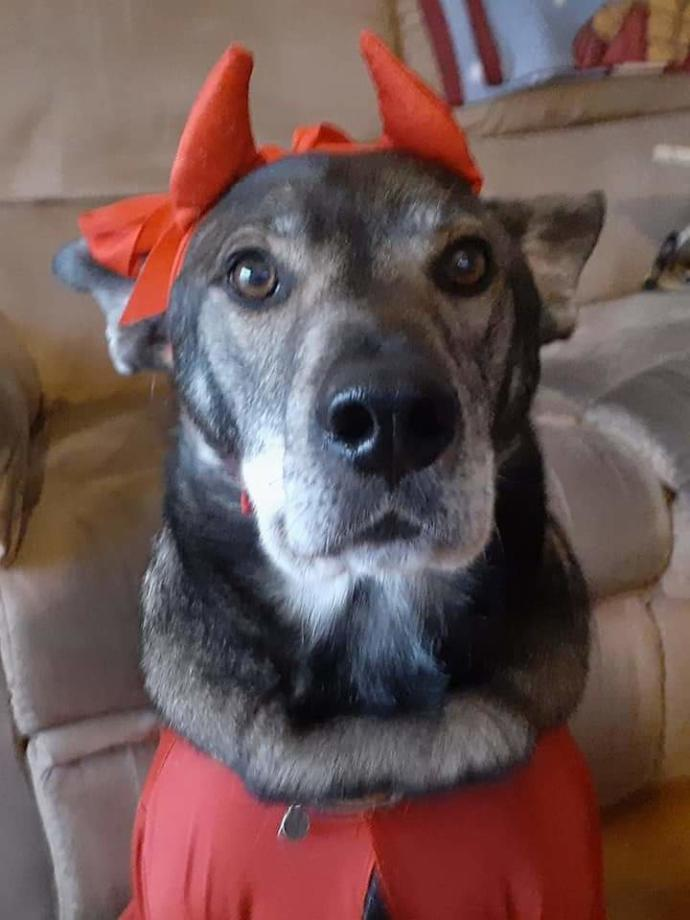 My dog Lilly passed away the day after Halloween age 20 ?