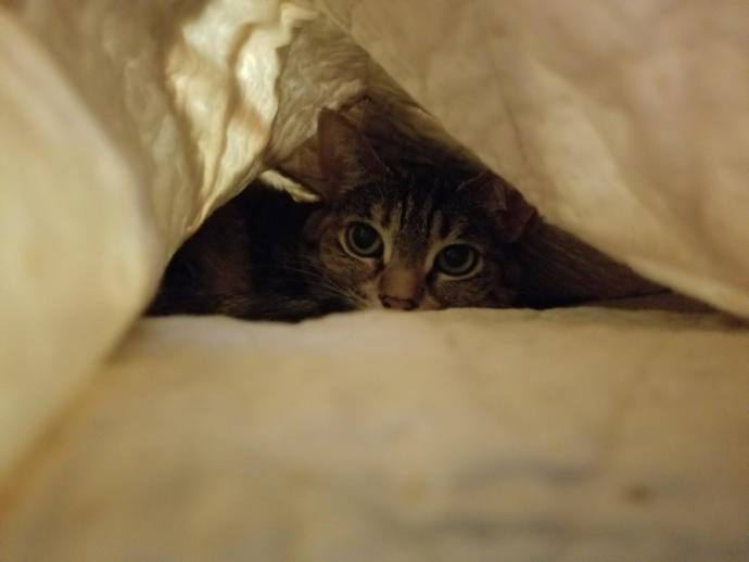 Have you had a cat that enjoyed laying under blankets?