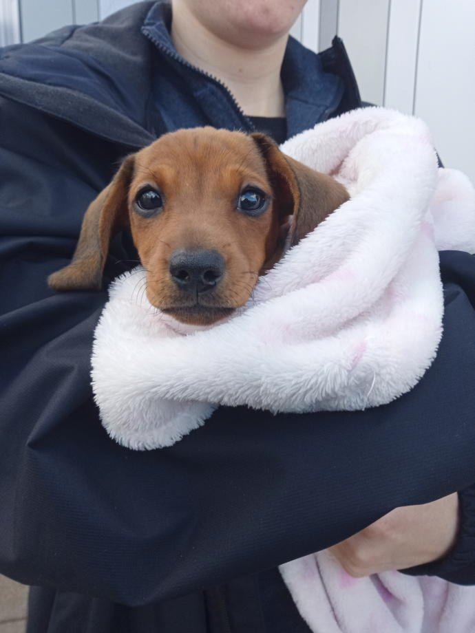 Please can everyone say hi to the new member of our family her name is Bella?