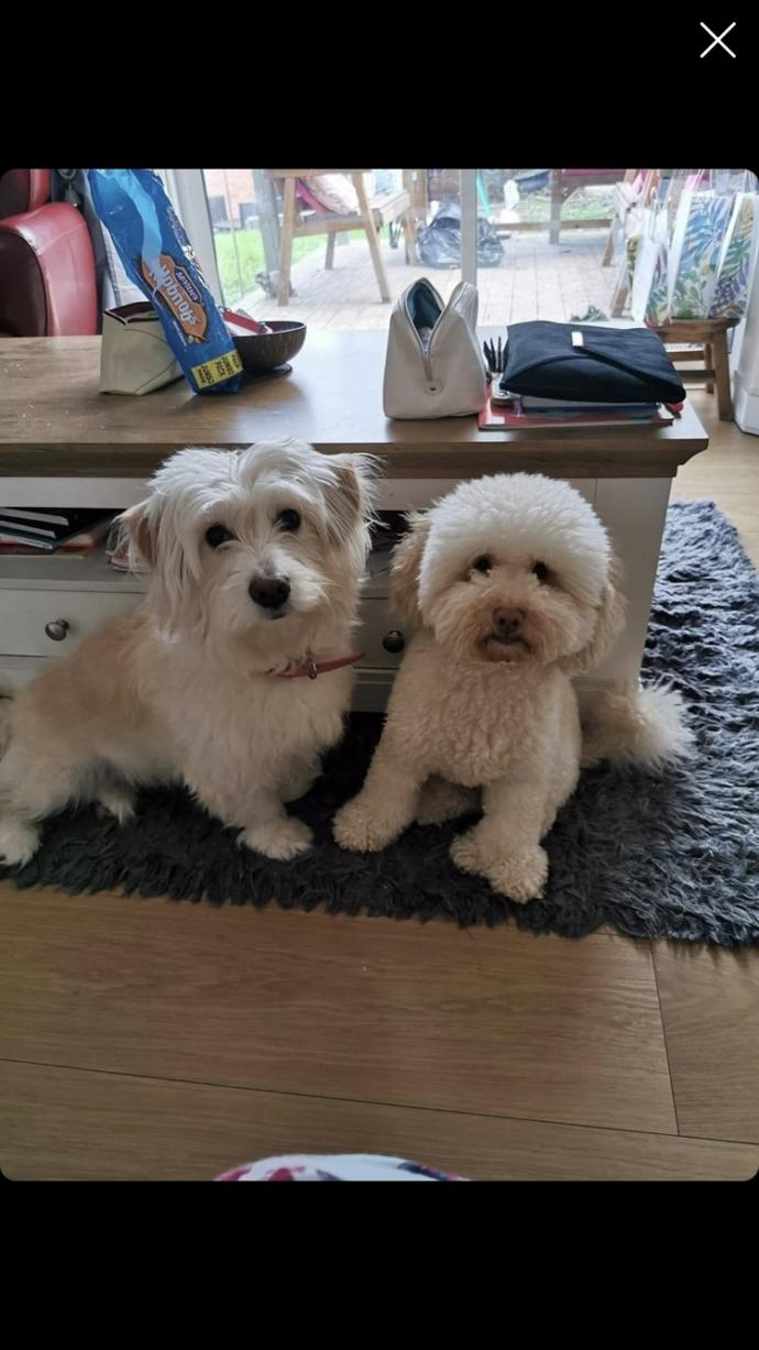 What dogs are these?
