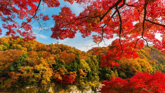 Whats your favorite color of tree leaves during autumn?