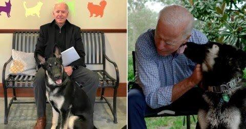Joe biden brings his rescue dog to live with him at the White house. Genuine move or political stunt?