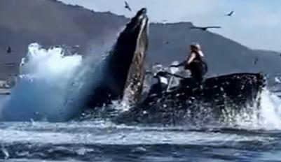 What do you think of the humpback whale swallowing kayakers?
