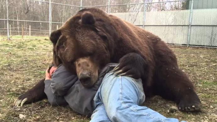 If you could cuddle or hug any animal without getting hurt, which animal would it be?