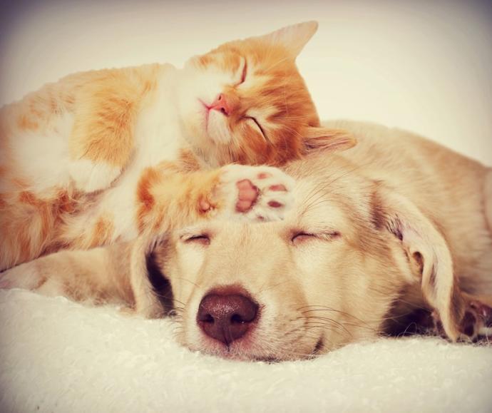 Do you prefer a cat or a dog?