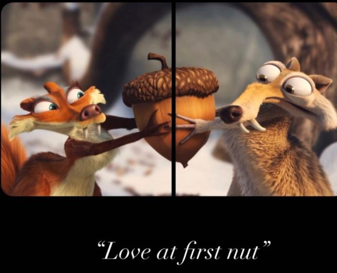 Do you believe in love at first nut?