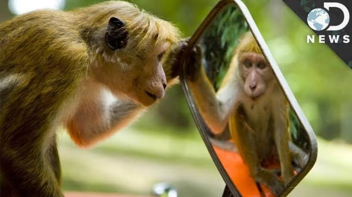 What do you think is the most underrated invention? Do you think mirrors impact consciousness?