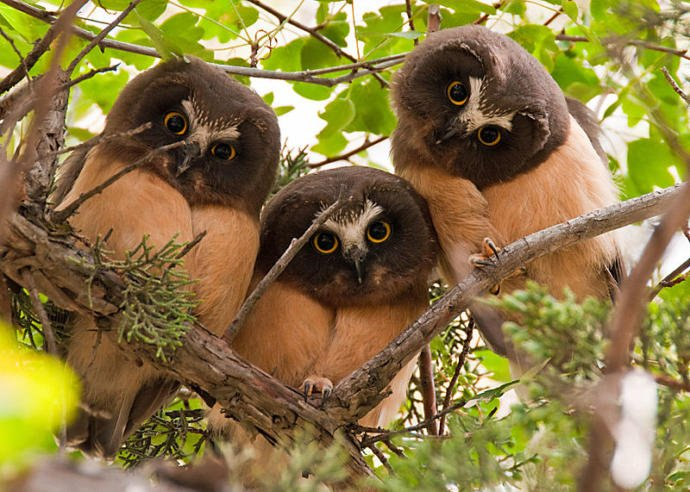 Would you want these owls to watch you?