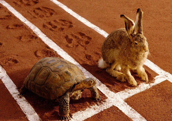 In The Bedroom Would You Rather Be The Tortoise Or The Hare?