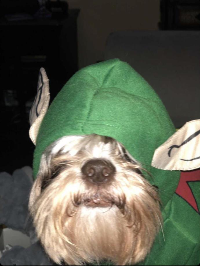 Thoughts on my dog's Christmas costume?