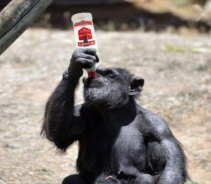 Would Your Rather Get Drunk With A Chimpanzee, A Moose, A Giraffe, A Duck Or A Dog?