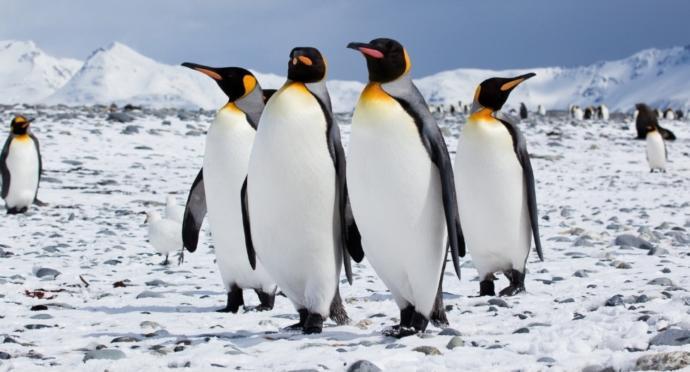 Whats your opinion on penguins?