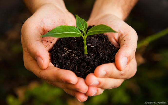 Are you planning to plant a garden or food bearing trees in 2021?