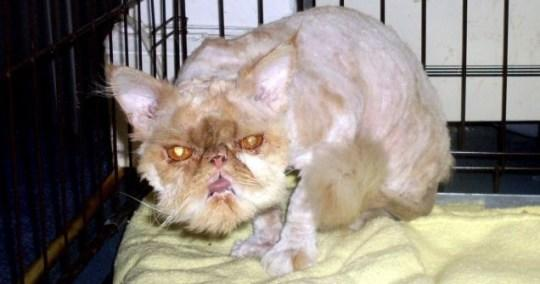 This is an ugly pussy but this question is really not asking about cats!