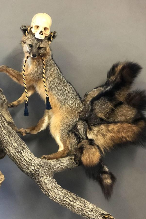 What do you think about taxidermy?