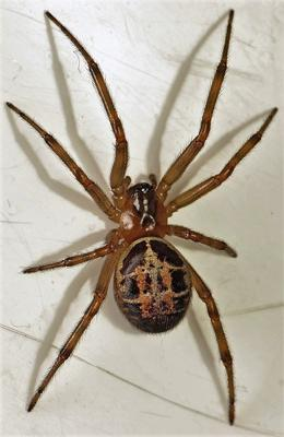 Do girls get scared when seeing pictures of spiders?