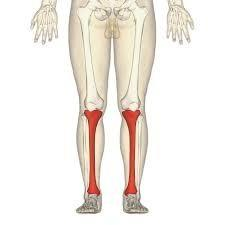 If you feel along your shin bone do you feel bumps from running into things your whole life?