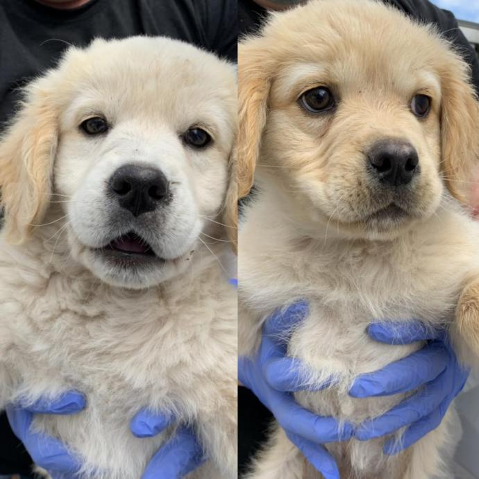 Which is a cuter puppy?