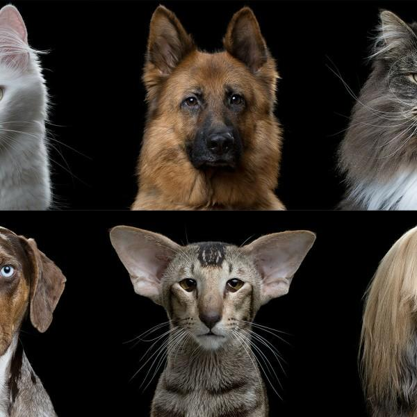 Sorry but, Cats or dogs?