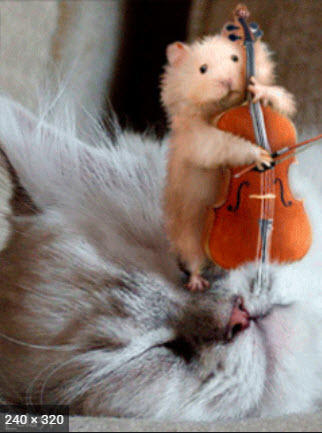 Cello Mouse!