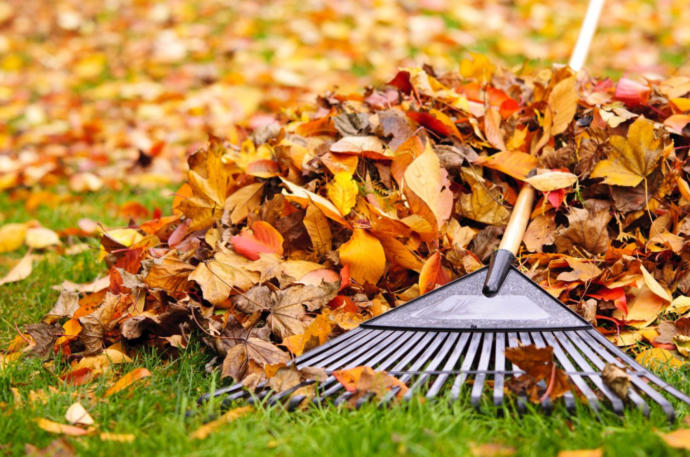Would You Rather Pull Weeds, Rake Leaves, Shovel Snow Or Pick Your Nose & Eat It?