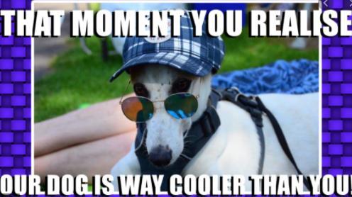 Do u like memes?