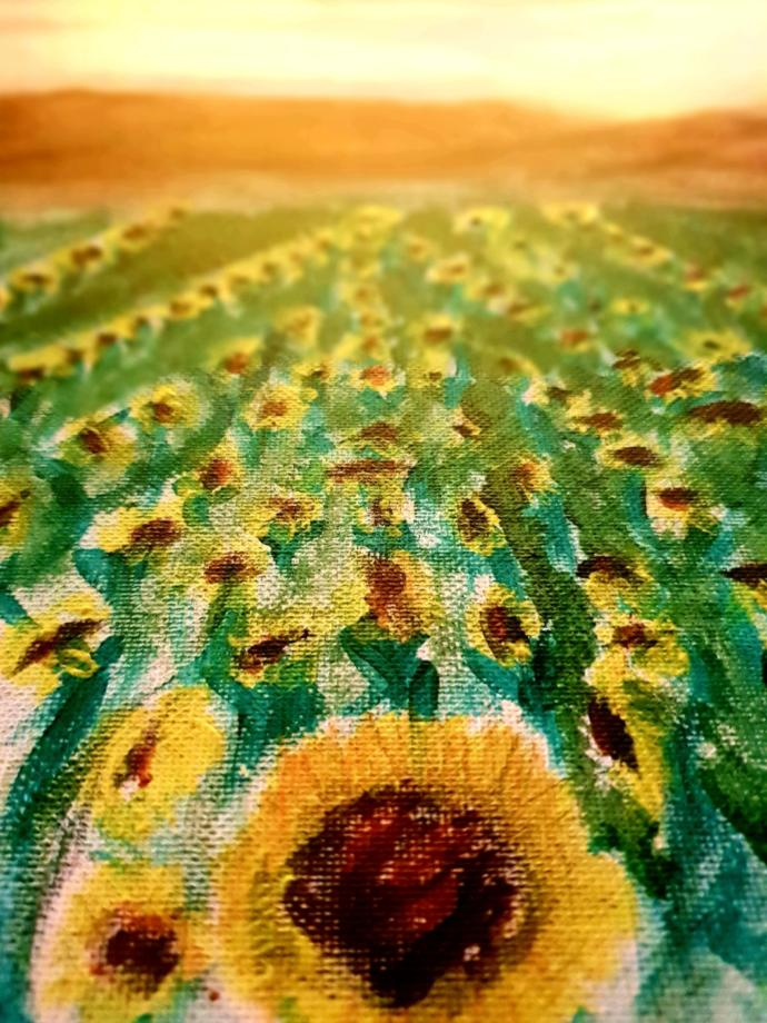 Sunflower flowing into the sunset