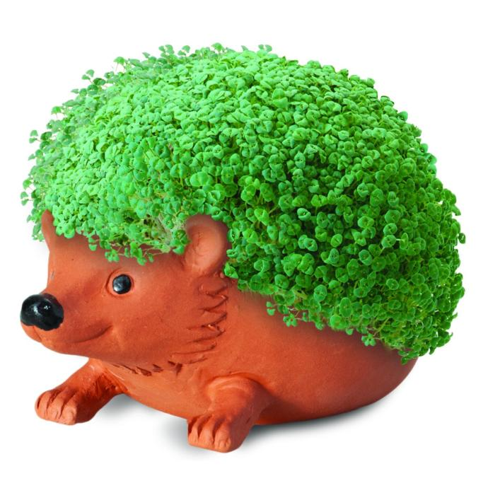What is Your Chia Pet of Choice?