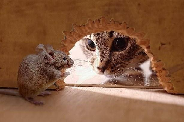 In a game of cat and mouse, are you the cat, or the mouse?