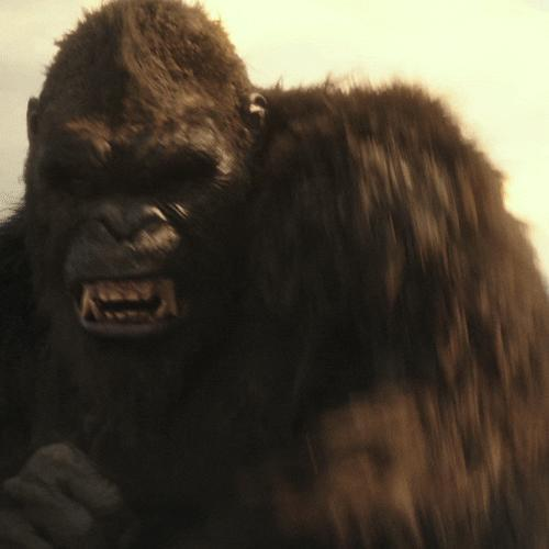 I was just informed that Kong got his ass served on a SilverPlatter, dont you fucking hate (movie-spoiler) people?