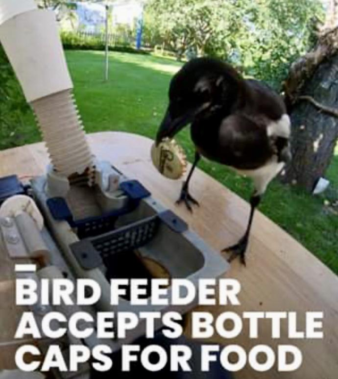 If Our Flying Feathered Friends Could Be Trained To Find Something For Food Rewards What Would You Train Them To Find?