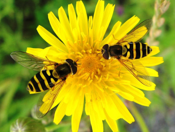 If Your Superpower Allowed You To Change Into Any INSECT What INSECT Would You Change Into?