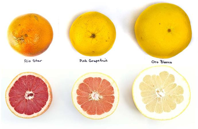 So, how do you feel about grapefruit?